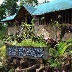 Malvar Organic Farm 01