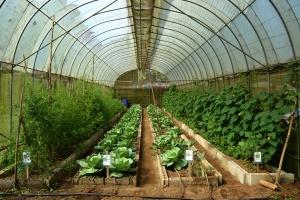 Malvar Organic Farm 08