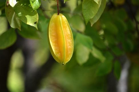 Tropical-Fruit-Farm-10
