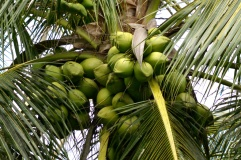 Tropical-Fruit-Farm-12