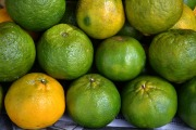 Tropical-Fruits-05