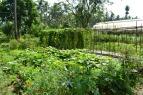 Villegas-Organic-Farm-04