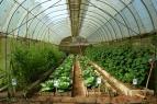Villegas-Organic-Farm-061