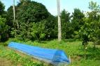 Villegas-Organic-Farm-12